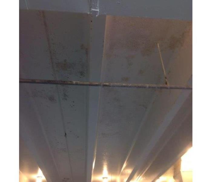 Commercial building in Vienna, Virginia has Mold Growth
