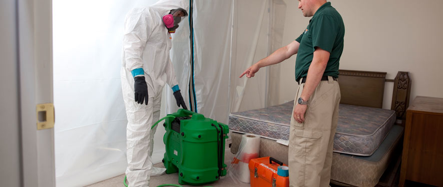 Annandale, VA mold removal process